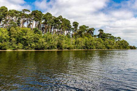 Forest in Island of Lough Corrib, Oughterard, Ireland Banco de Imagens