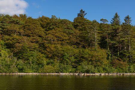 Forest around Lough Corrib lake, Cong, Mayo, Ireland