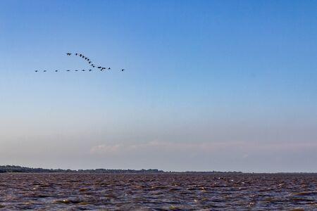 Birds flying over Guaiba lake at sunset, Rio Grande do Sul, Brazil