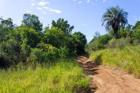 Road and forest in Morro Santana mountain in Porto Alegre, Rio Grande do Sul, Brazil