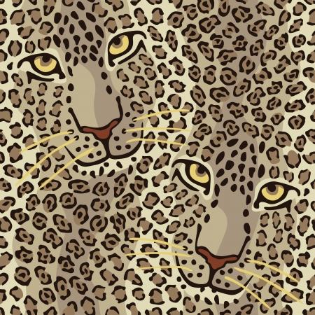 lince: patr�n de un gato Pareja salvaje repite a la perfecci�n