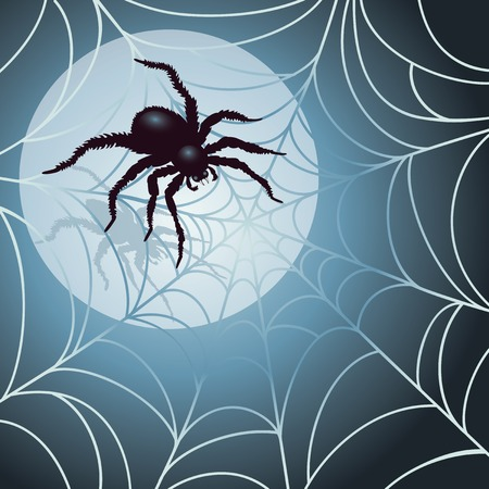 spiderweb: Moonlit Spider and Web