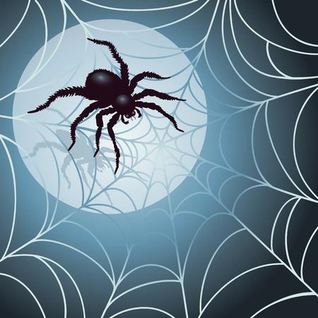 spider web: Moonlit Spider and Web