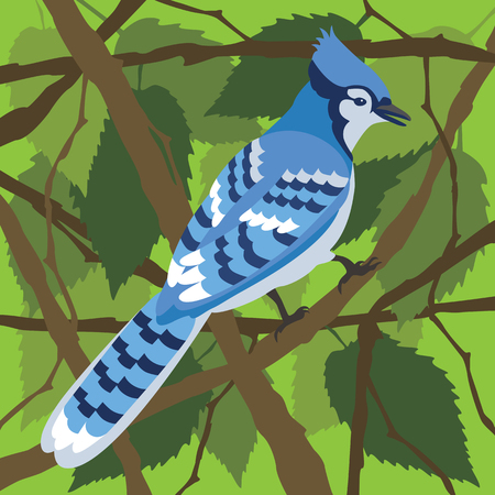 Vector illustration of the North American Blue Jay in a tree. Illustration