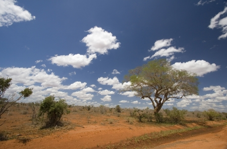 Red earth & bush landscape of the Tsavo National Park, Kenya