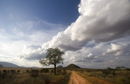 Red dirt track of Tsavo East, Kenya photo