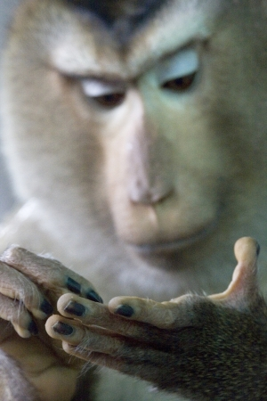 Close up of monkey looking at it Stock Photo - 16267289