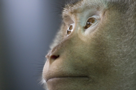 Close up of a monkey Stock Photo - 16267288