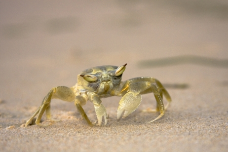 Close up of a crab standing on the sand with interesting  photo