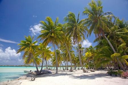 french polynesia: Palm trees on the beach of tropical Bora Bora, French Polynesia