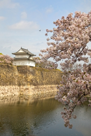 Look out tower on the wall of the moat surrounding Osaka Castle with cherry blossom in the foreground, Osaka, Japan