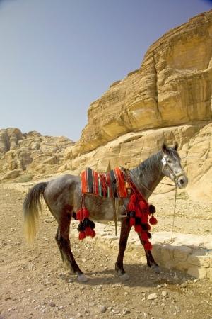 siq: Decorated horse at the entrance to the Siq, Petra, Jordan.