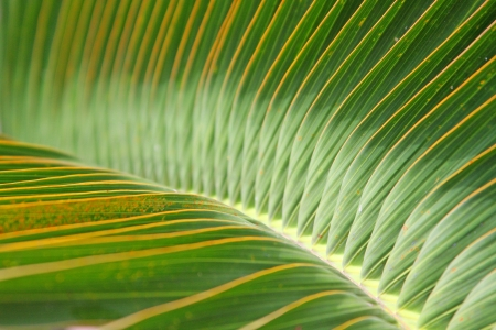 close up on the center of palm tree leaves