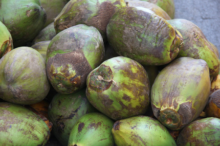 Pile of natural green ripe coconuts ready to eat & drink, Cargagena, Colombia. Stock Photo