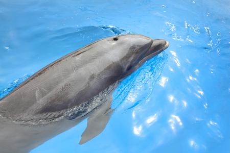 Dolphin swimming in beautiful blue sea, Puerto Vallarta, Mexico.