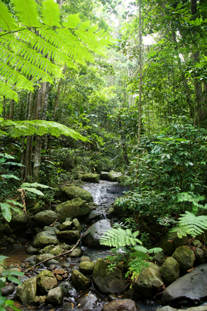 Steam running throught the rainforest with beautiful plants & trees, St Lucia, Caribbean.