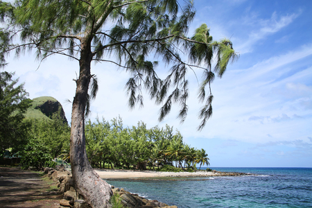 Beautiful tropical beach with pine & palm trees, Gros Islet coastline, St Lucia, Caribbean. Stock Photo