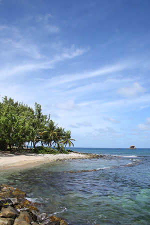 Beautiful tropical beach with palm trees, Gros Islet coastline, St Lucia, Caribbean. Stock Photo