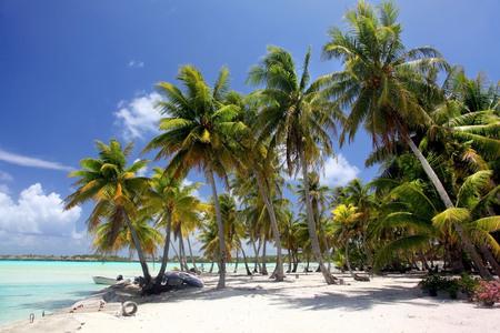 Tropical beach with palm trees, Bora Bora, French Polynesia.