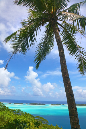Tropical palm tree with a beautiful chain of islands & breathtaking landscape in the background, Bora Bora, French Polynesia.