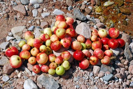 melba: Una gran cantidad de manzanas en el arroyo