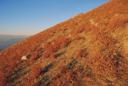 quemado: ladera de la montaña con la hierba de otoño quemado