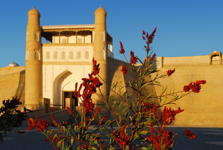 ark: Flowers on the background of amaranth Ark fortress in Bukhara at sunset Stock Photo
