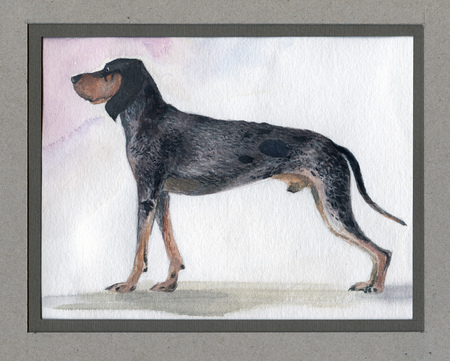 The big blue Gascon beagle painted in watercolor in profile