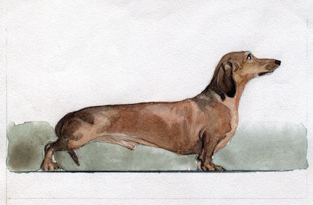 Brown dachshund painted in watercolor in profile