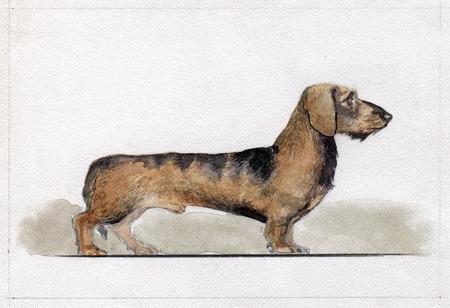 Dwarf fee painted in watercolor in profile