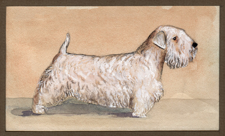 Silichem Terrier painted in watercolor in profile on a beige background Banco de Imagens