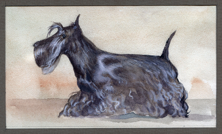Scotch terrier painted in watercolor in profile