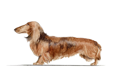 A rabbit dachshund painted in watercolor in profile