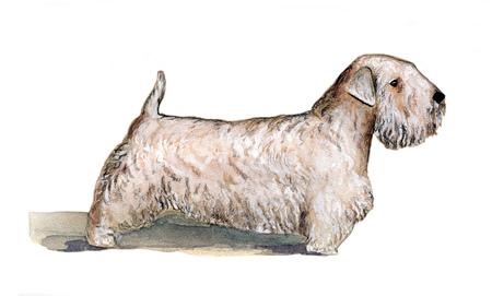 Silichem Terrier painted in watercolor in profile Banco de Imagens