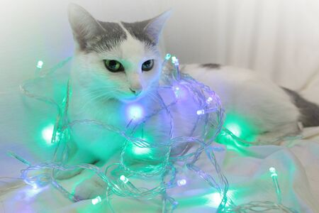 White kitty in a New Year's garland
