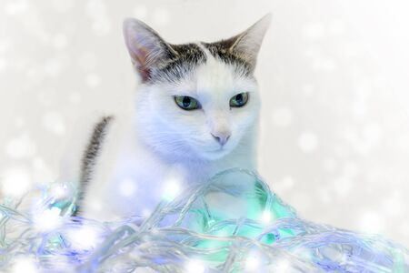 A white cat with symmetrical spots on its face lies in the New Years garland. White, blue, green