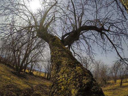 この春に撮影された写真私は、後ろから鳥瞰図を持つために木の上に横たわっていました。太陽は曇り空にあった。ケベック州,カナダ;2018年4月15日