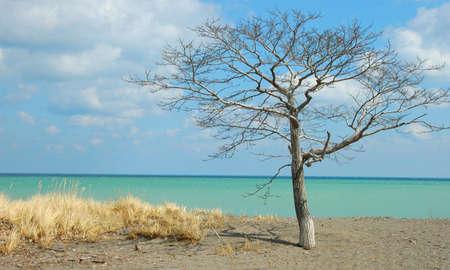 Caribbean Hamilton