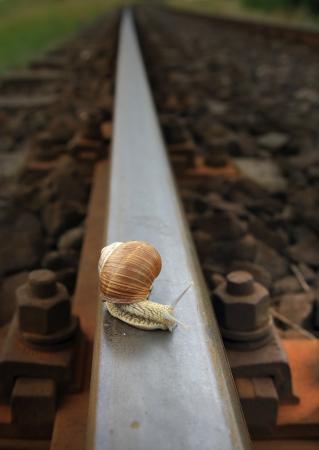 snail on tracks near the station of Dobre Miasto Warmia-Poland photo