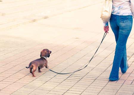 dog on leash: Chica caminando con su mascota Foto de archivo