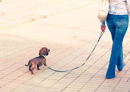 pet leash: Girl walking with her pet Stock Photo