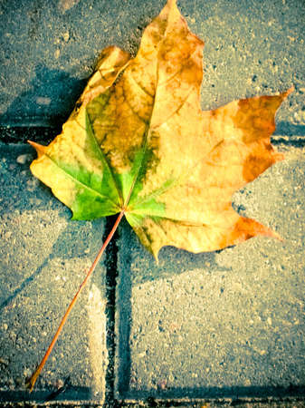 Fallen leaf on an sidewalk in the city. photo