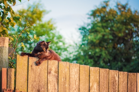 Cat is walking on a fence. Neighbors? cat is staring at photographer. photo
