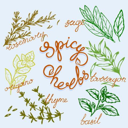 Logomuster von würzigen Kräutern mit Schriftzug im Retro-Stil, Vektorillustration, Postkarte