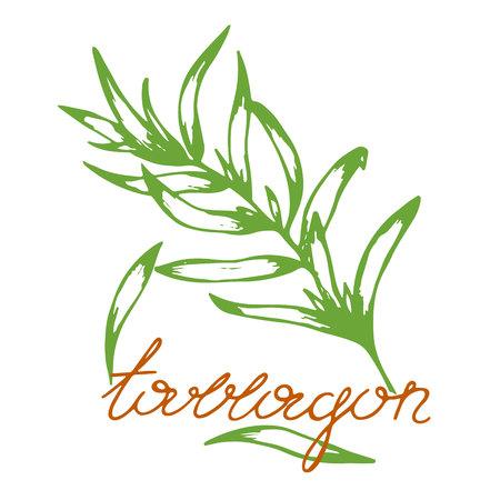 ретро рисунок тархуна в стиле скетчинг с леттерингом, векторная иллюстрация пряной травы
