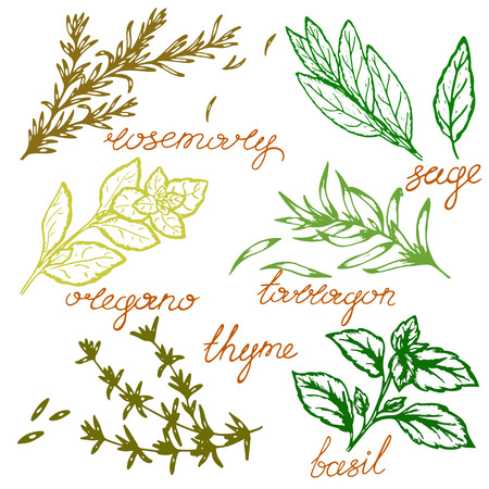 logo pattern of spicy herbs with lettering in retro style, vector illustration, postcard Logo