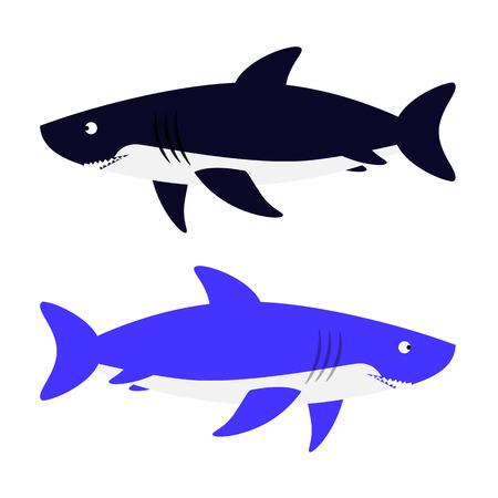 carnivore: Shark illustration. Isolated aggressive sea carnivore