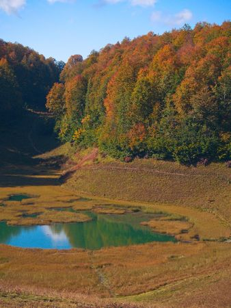 copse: Small overgrown lake at the autumn forest