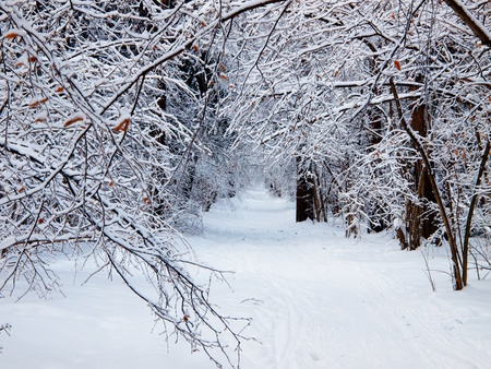 throughout: Trail throughout winter park. Stock Photo