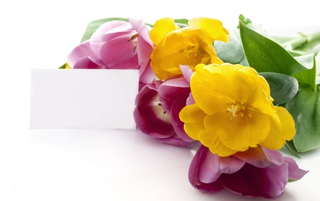 Yellow and red tulips on a white background with blank card for greeting or text  Shot with natural light  photo